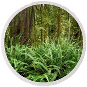 1a2912-ferns In Rain Forest Canada  Round Beach Towel