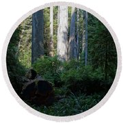 Ferns Of The Redwood Forest Round Beach Towel