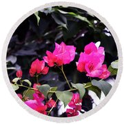 Fernwood Botanical Garden Bougainvillea Niles Michigan Usa Round Beach Towel