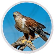 Ferruginous Hawk About To Take Round Beach Towel