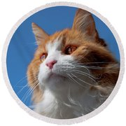 Festus... Round Beach Towel