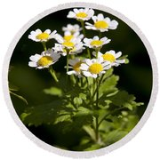 Feverfew Round Beach Towel