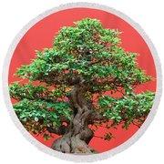 Ficus Bonsai Round Beach Towel