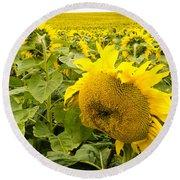 Field Of Blooming Yellow Sunflowers To Horizon Round Beach Towel