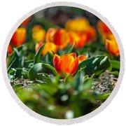 Field Of Orange Tulips Round Beach Towel