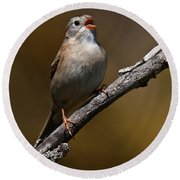 Field Sparrow Pictures 23 Round Beach Towel