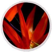 Fiery Red Bird Of Paradise Round Beach Towel