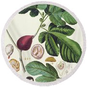 Fig Engraved By Johann Jakob Haid  Round Beach Towel
