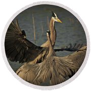 Fighting Great Blue Herons Round Beach Towel