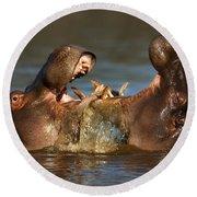 Fighting Hippo's Round Beach Towel