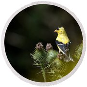 Finch In The Thistles Round Beach Towel