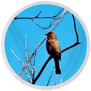 Finch On Branch 031015a Round Beach Towel