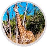 Find The Giraffe Round Beach Towel