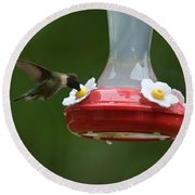 Fiona The Little Female Hummingbird Round Beach Towel