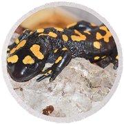 Fire Salamander Salamandra Salamandra Round Beach Towel