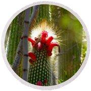 Firecracker Cacti Round Beach Towel