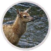 Firehole River Elk Fawn Round Beach Towel