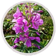 Fireweed In Katmai National Preserve-ak- Round Beach Towel