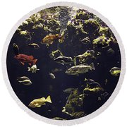 Fish Aquarium Round Beach Towel