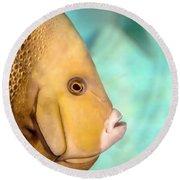 Fish Profile Round Beach Towel