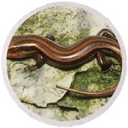 Five-lined Skink Round Beach Towel