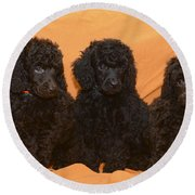 Five Poodle Puppies  Round Beach Towel