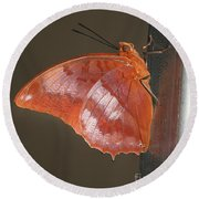 Flame-bordered Charaxes Butterfly #3 Round Beach Towel