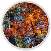 Flaming Maple Beneath The Pines Round Beach Towel