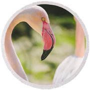 Flamingo Bird Portrait. Round Beach Towel