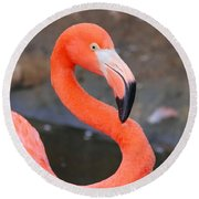 Flamingo Close Up Round Beach Towel