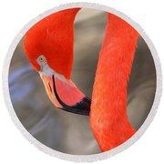 Flamingo Curves Round Beach Towel