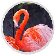 Flamingo In The Wild Round Beach Towel