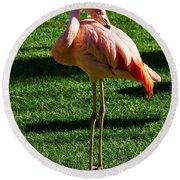 Flamingo Round Beach Towel