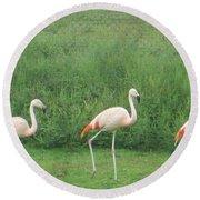 Flamingo March Round Beach Towel