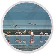 Flamingo On Lake Nakuru Round Beach Towel