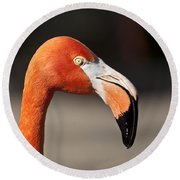 Flamingo Portrait Round Beach Towel