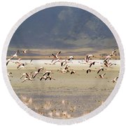 Flamingos Flying Over Water Round Beach Towel