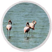 Flamingos Gathering Together Round Beach Towel