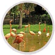 Flamingos Wading Round Beach Towel