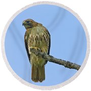 Fledged Red Tailed Hawk Round Beach Towel
