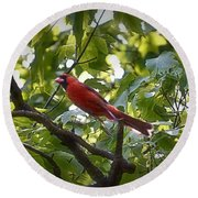Flight Of The Cardinal Round Beach Towel