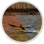 Flight Of The Pelican-featured In Wildlife-newbies And Comfortable Art Groups Round Beach Towel