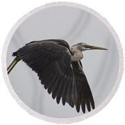 Flight Of The White Necked Heron Round Beach Towel