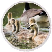 Floating Along The Pond Round Beach Towel
