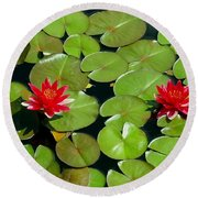 Floating Red Water Lilly Flowers On Pond Round Beach Towel