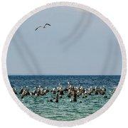 Flock Of Seagulls Round Beach Towel