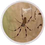 Florida Banana Spider Round Beach Towel