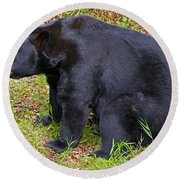 Florida Black Bear Round Beach Towel