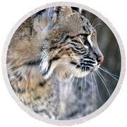 Florida Bobcat Round Beach Towel