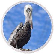 Florida Brown Pelican Round Beach Towel by Kim Hojnacki
